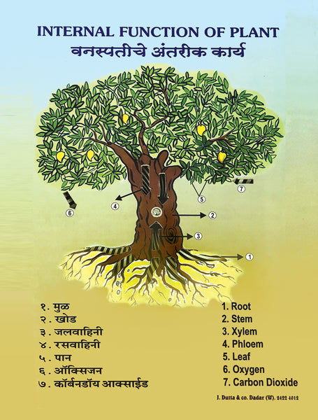 Parts of a plant labelled in English and Marathi to teach students