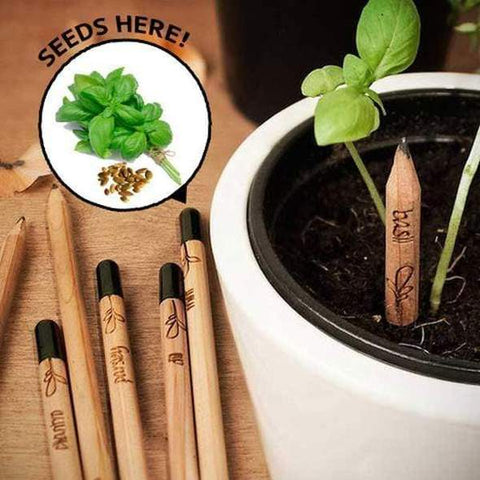 Sprout Pencil - Plantable Pencils - Pencils You Can Plant