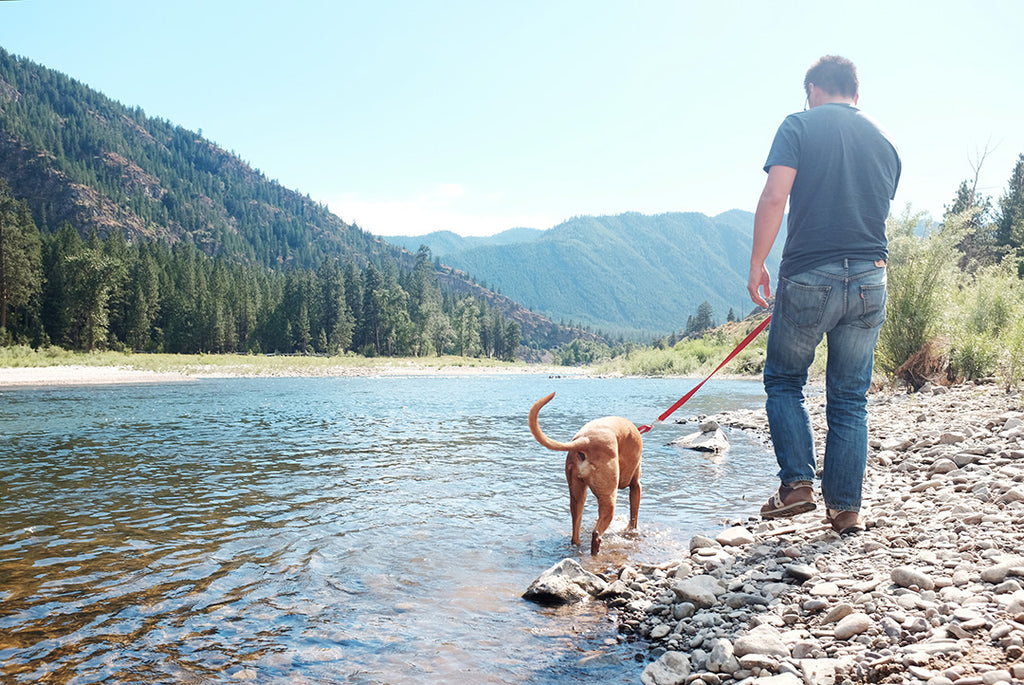 Montana, river, rock-hounding with dog