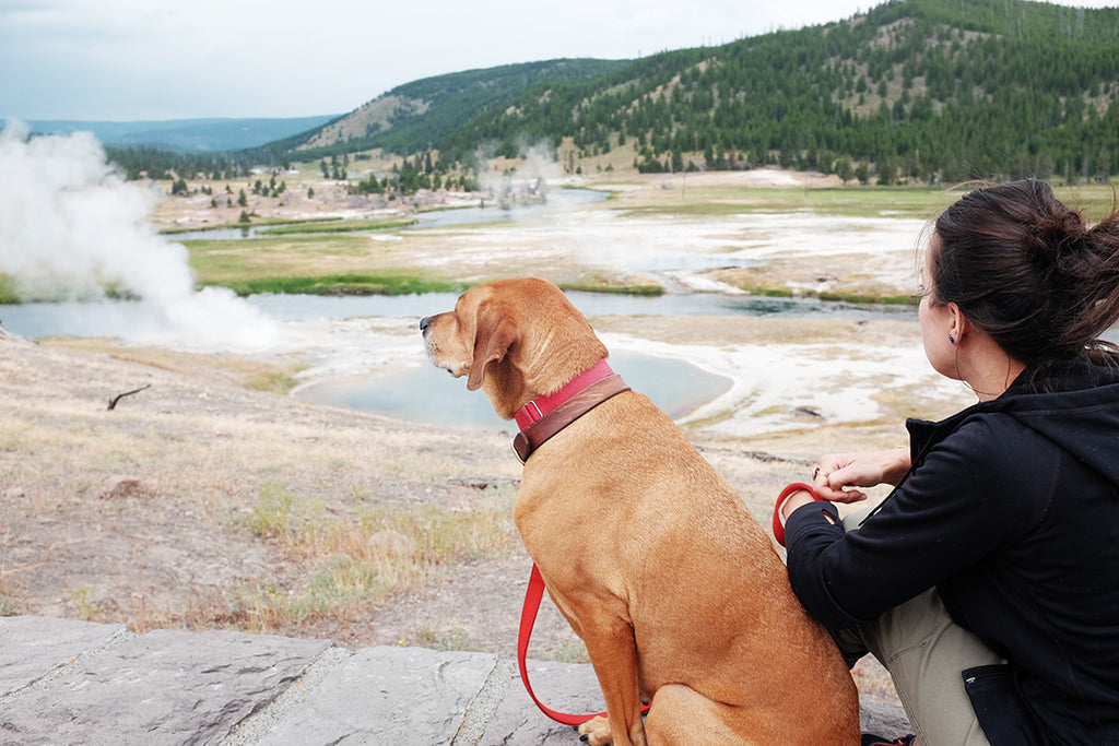 Yellowstone with dog