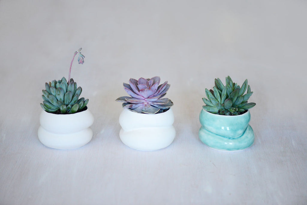 succulent gift ideas, porcelain planters made in Boston