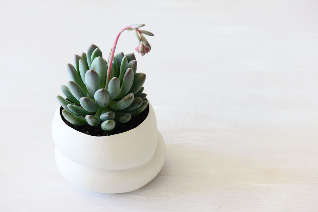 succulent in porcelain vase, made by Porcelain and Stone