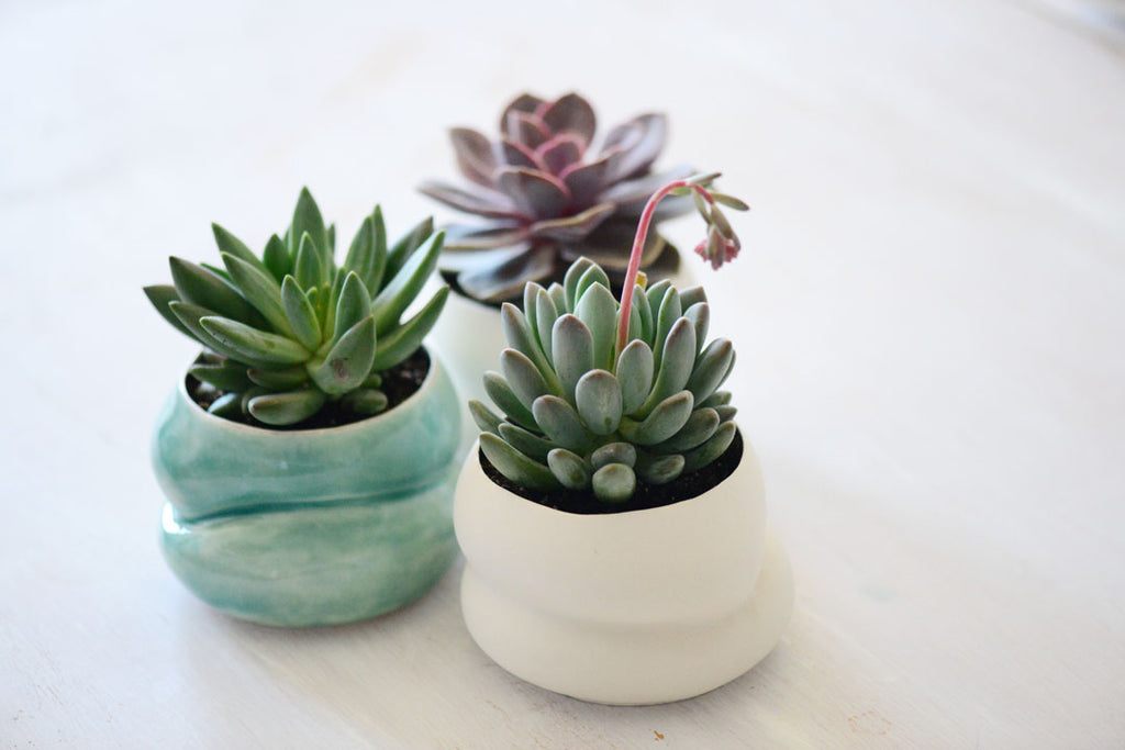 succulents in porcelain vessels, succulent ideas