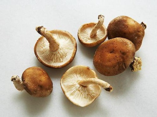 Organic Shitaki Mushrooms