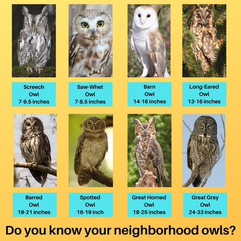 Do you know what size owls are in your neighborhood, here is the KingWood Owls size chart to help you out on your owl adventure!