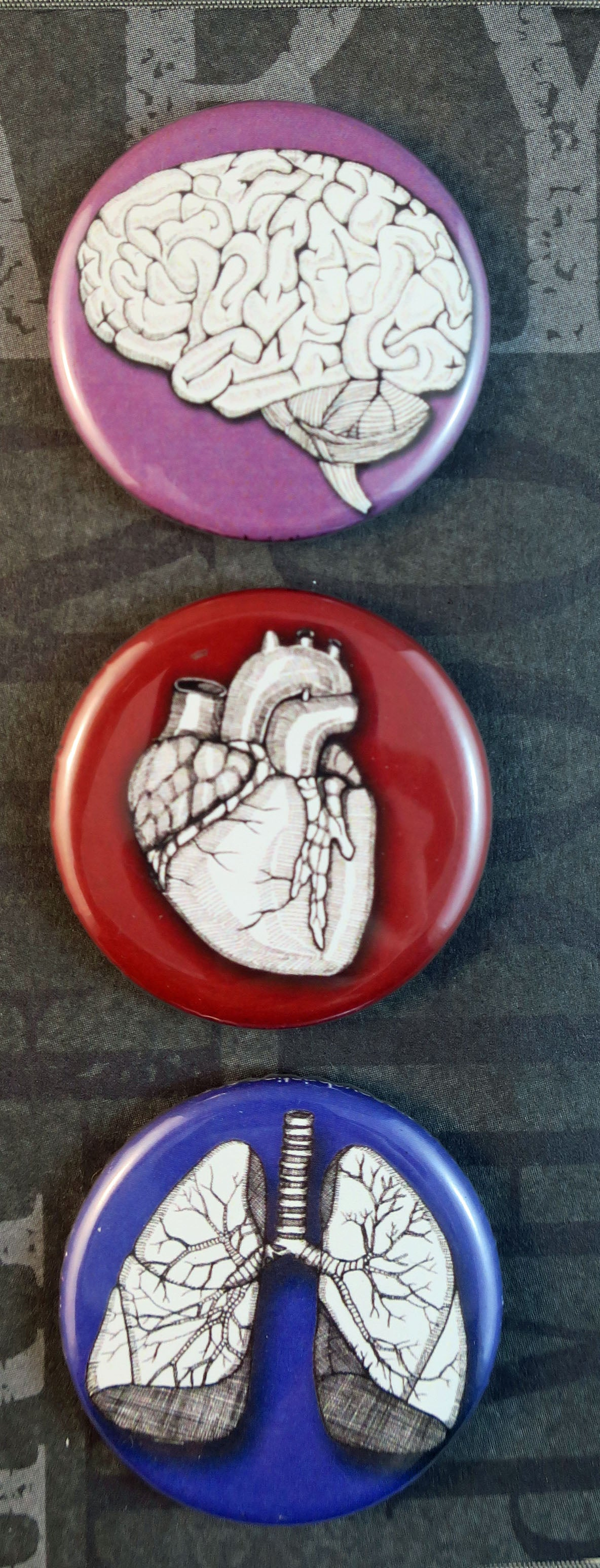 Human Anatomy Buttons and Magnets - the organs... Heart, Lungs and Brain - individual or as a set