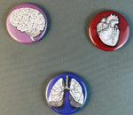 Load image into Gallery viewer, Human Anatomy Buttons and Magnets - the organs... Heart, Lungs and Brain - individual or as a set