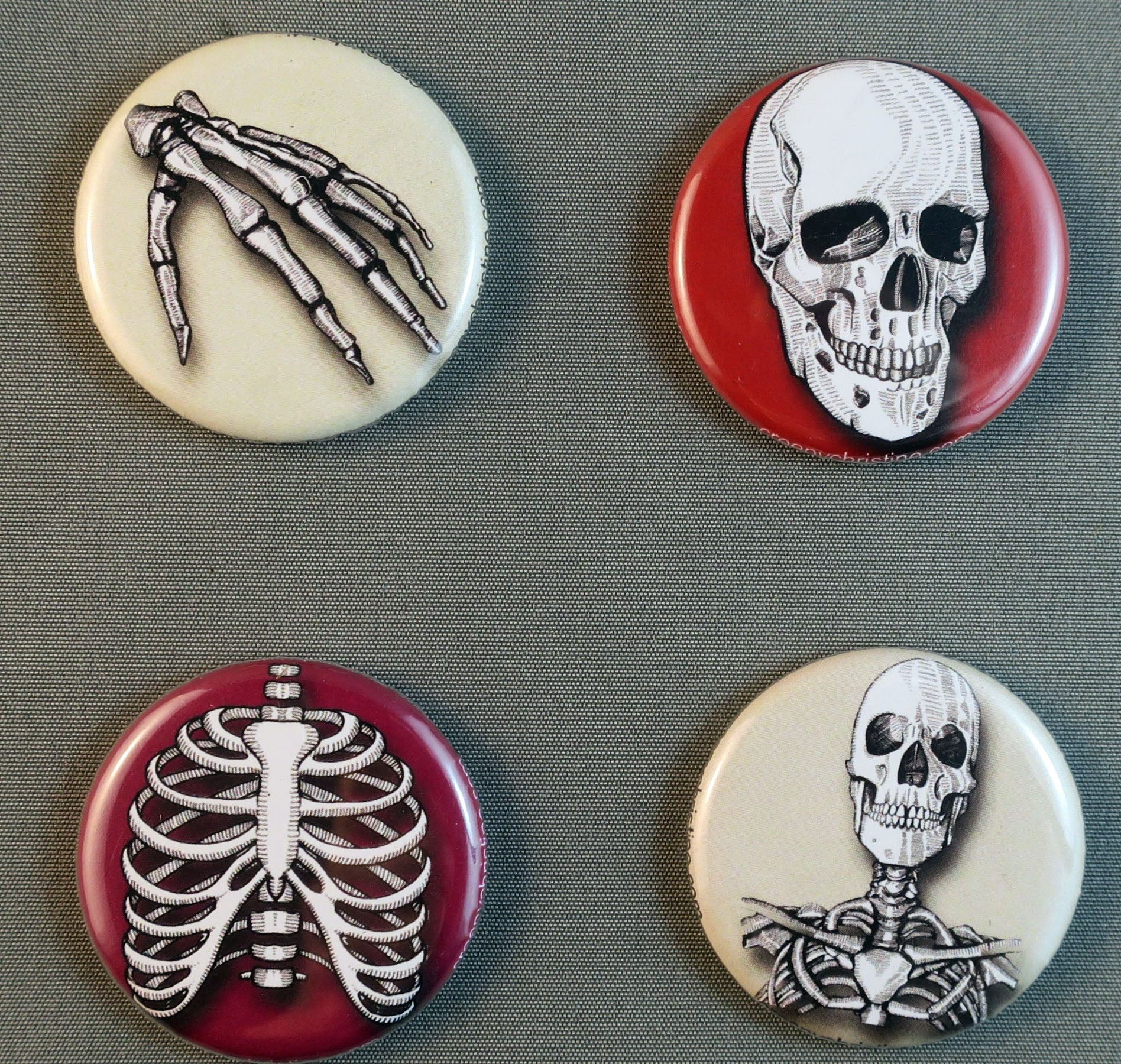 human anatomy bones ribs skull buttons magnets