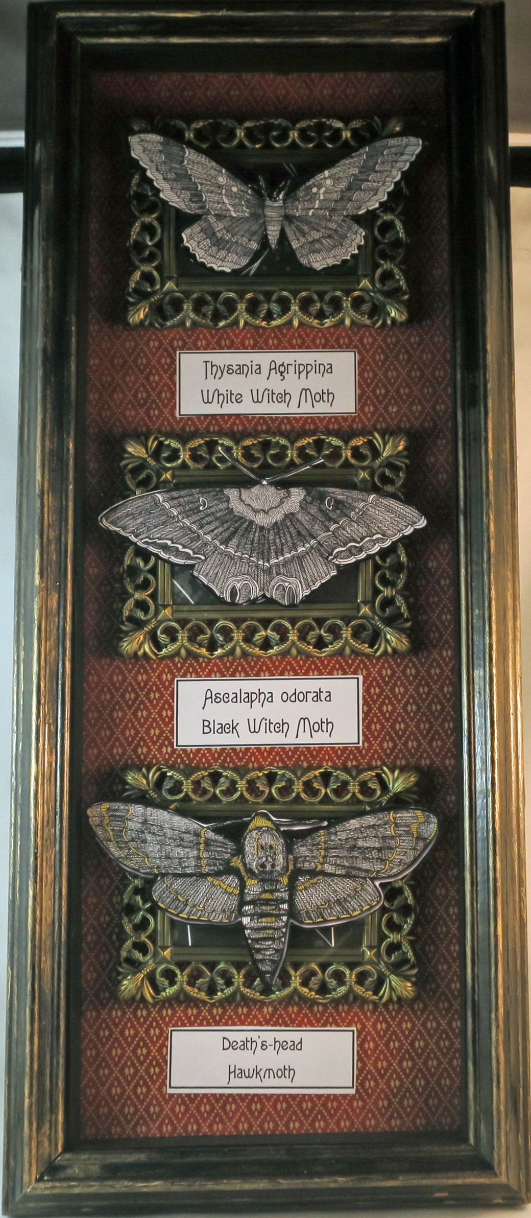 Moth Shadowbox - white and black witch moth and death's head moth