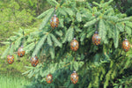 Load image into Gallery viewer, pine cone ornament with eyes