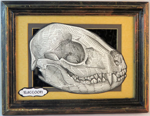 raccoon skull framed original illustration