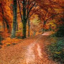 Load image into Gallery viewer, fallen leaves soy candle fall path