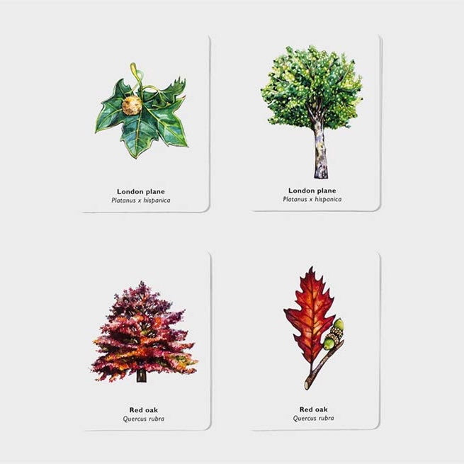 Match A Leaf Card Game - Folk Like These