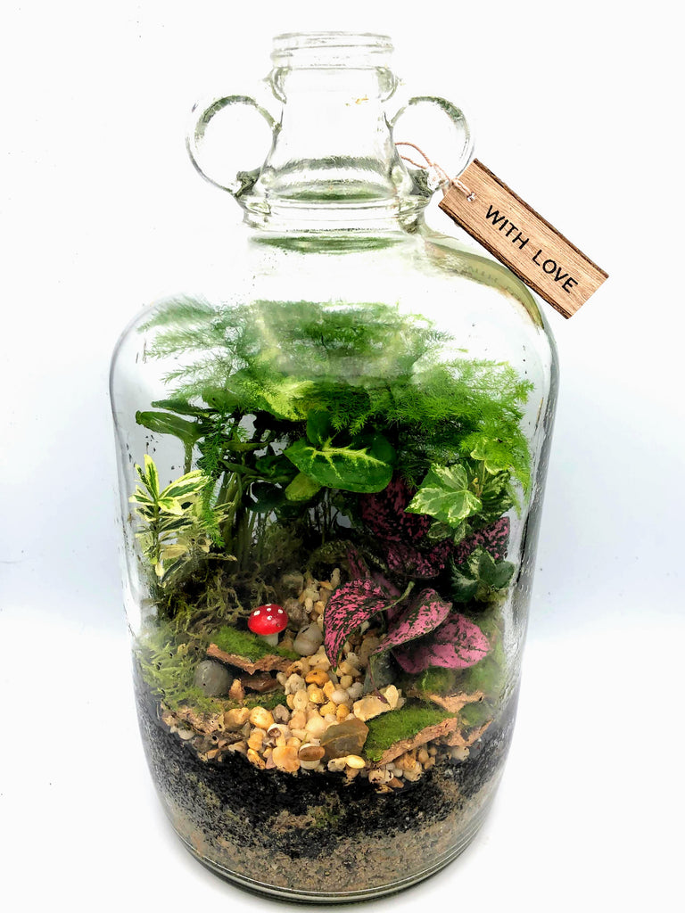 Correctly Placing and Caring For Your Terrarium Plants