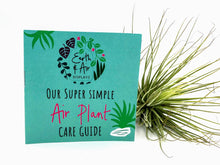 Load image into Gallery viewer, Air Plant Care Kit and Guide