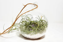 Load image into Gallery viewer, Crystal Terrarium Kit with Spanish Moss Air Plant | Choice of 3 Crystals