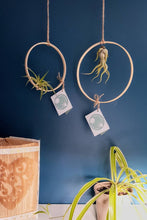 Load image into Gallery viewer, Living Air Plants in Hanging Bamboo Hoop Holders | 3 Sizes Available | Hanging Plants | Free PDF Care Guide