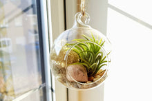 Load image into Gallery viewer, Little Wooden Mouse Air Plant Terrarium Kit