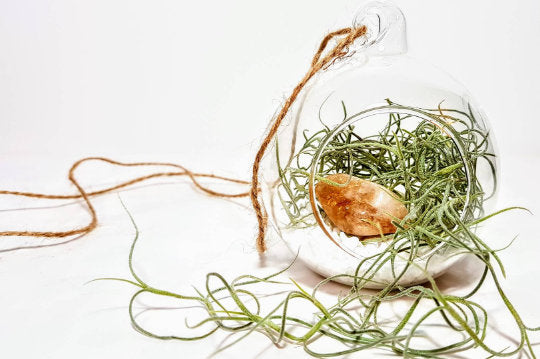 Crystal Terrarium Kit with Spanish Moss Air Plant | Choice of 3 Crystals