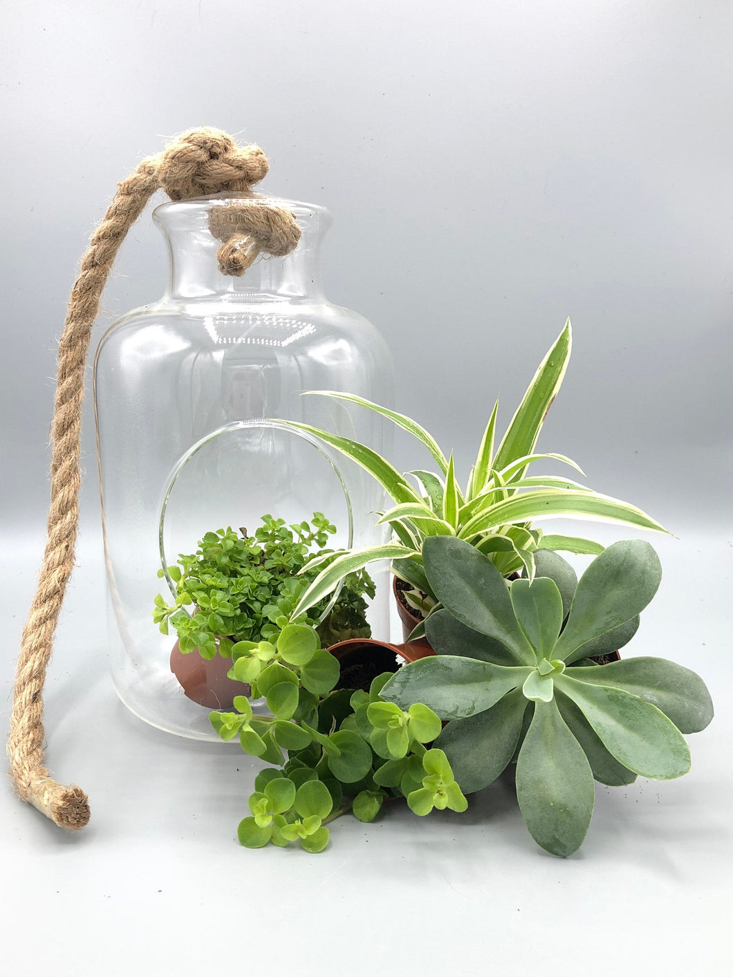 Open Terrarium Plant Mix | Eden Collection