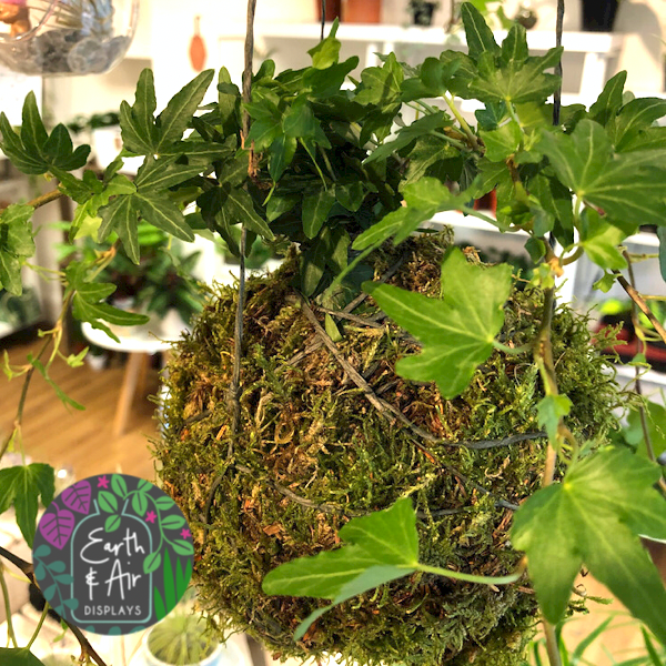 Hanging Kokedama with Ivy by Earth & Air Displays