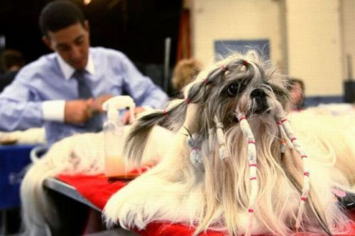 Dog-Hair-Cut-10.jpg