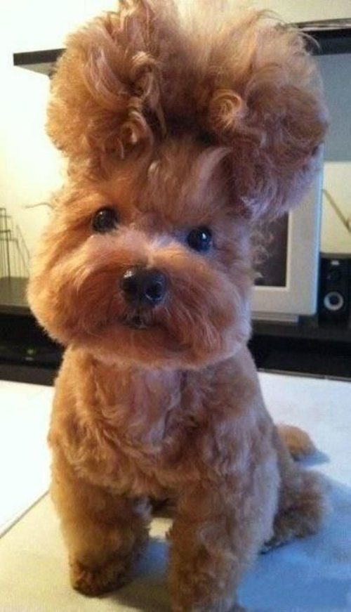 Dog-Hair-Cut-13.jpg