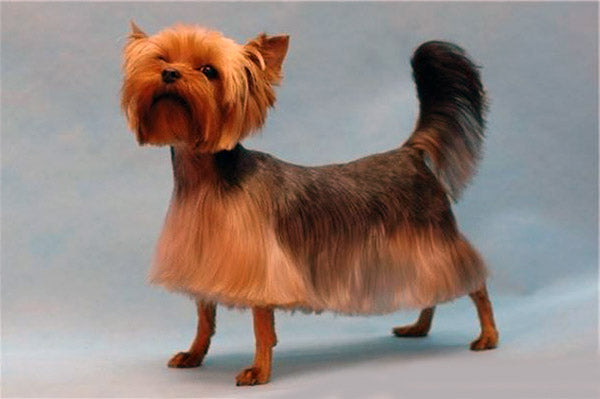Dog-Hair-Cut-9.jpg