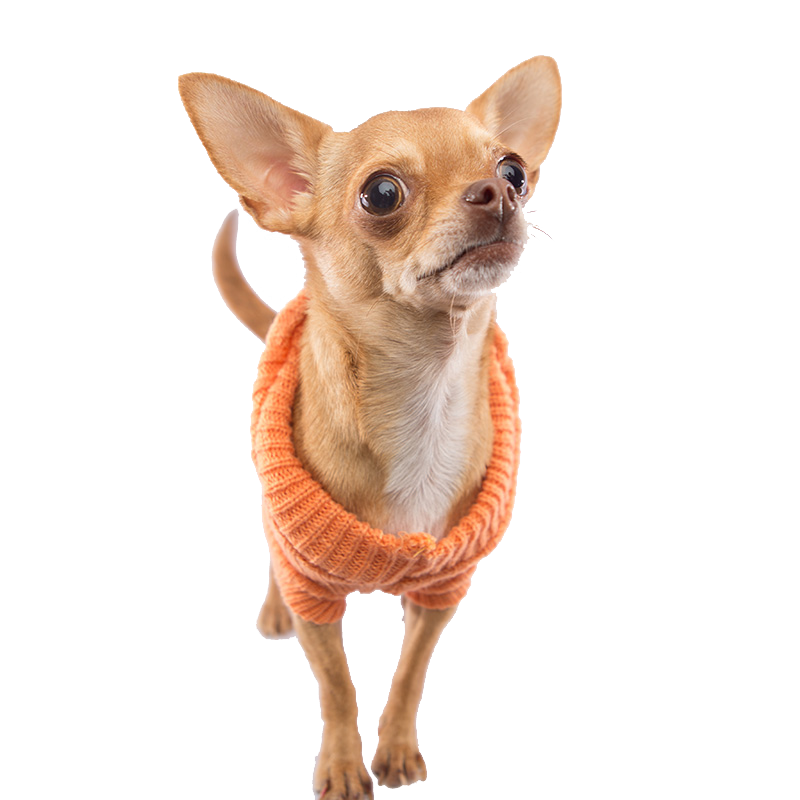 Orange Dog Sweater