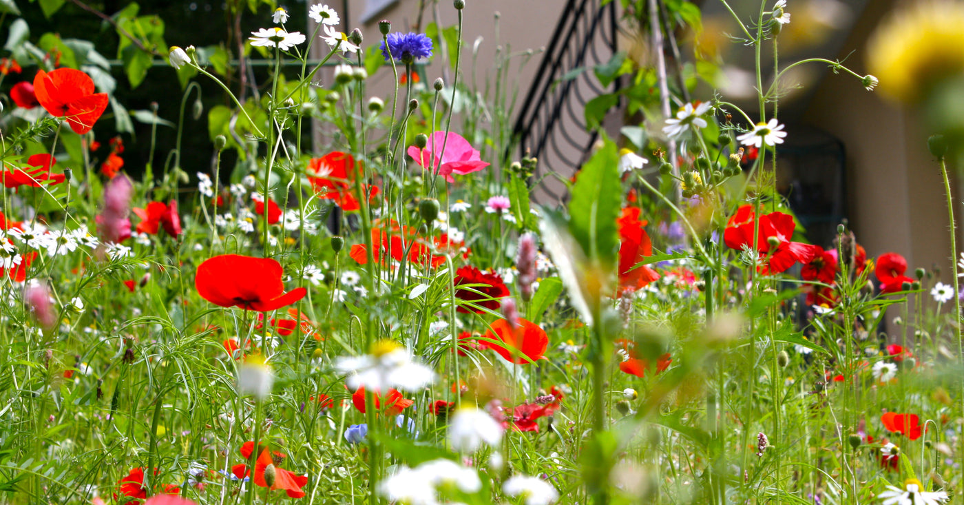 How To Build A Raised Wildflower Garden In A Small Backyard