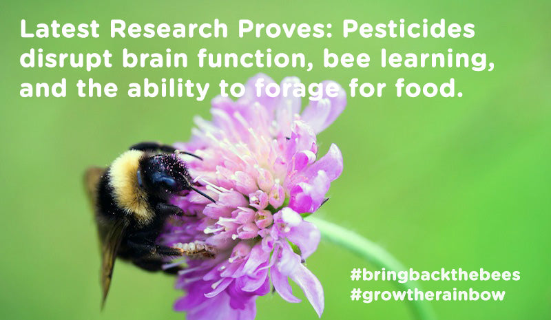 Research proves pesticides  disrupt brain function, bee learning,  and the ability to forage for food.