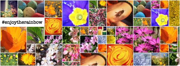 Collage of wildflower images in a mosaic