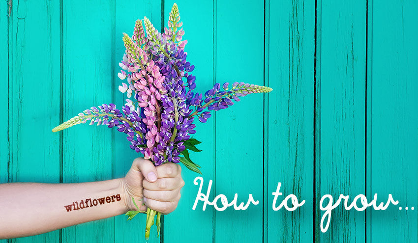 How To Grow Wildflowers Instructions