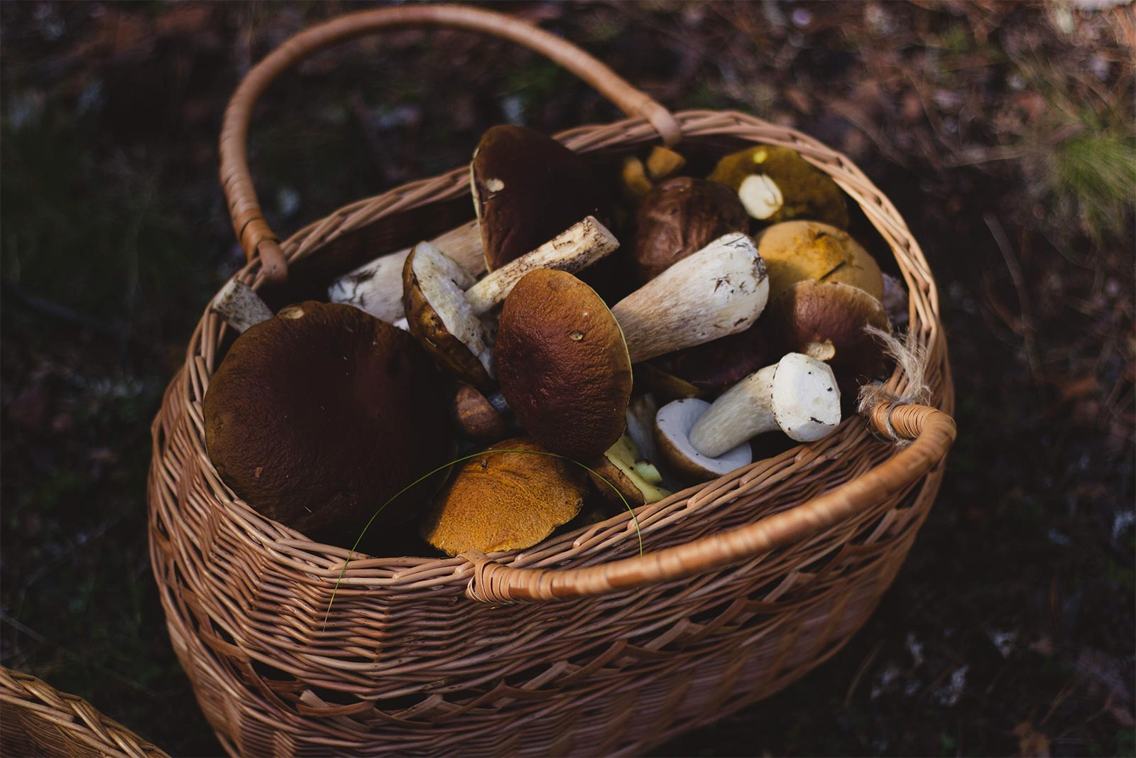 are all mushrooms adaptogens
