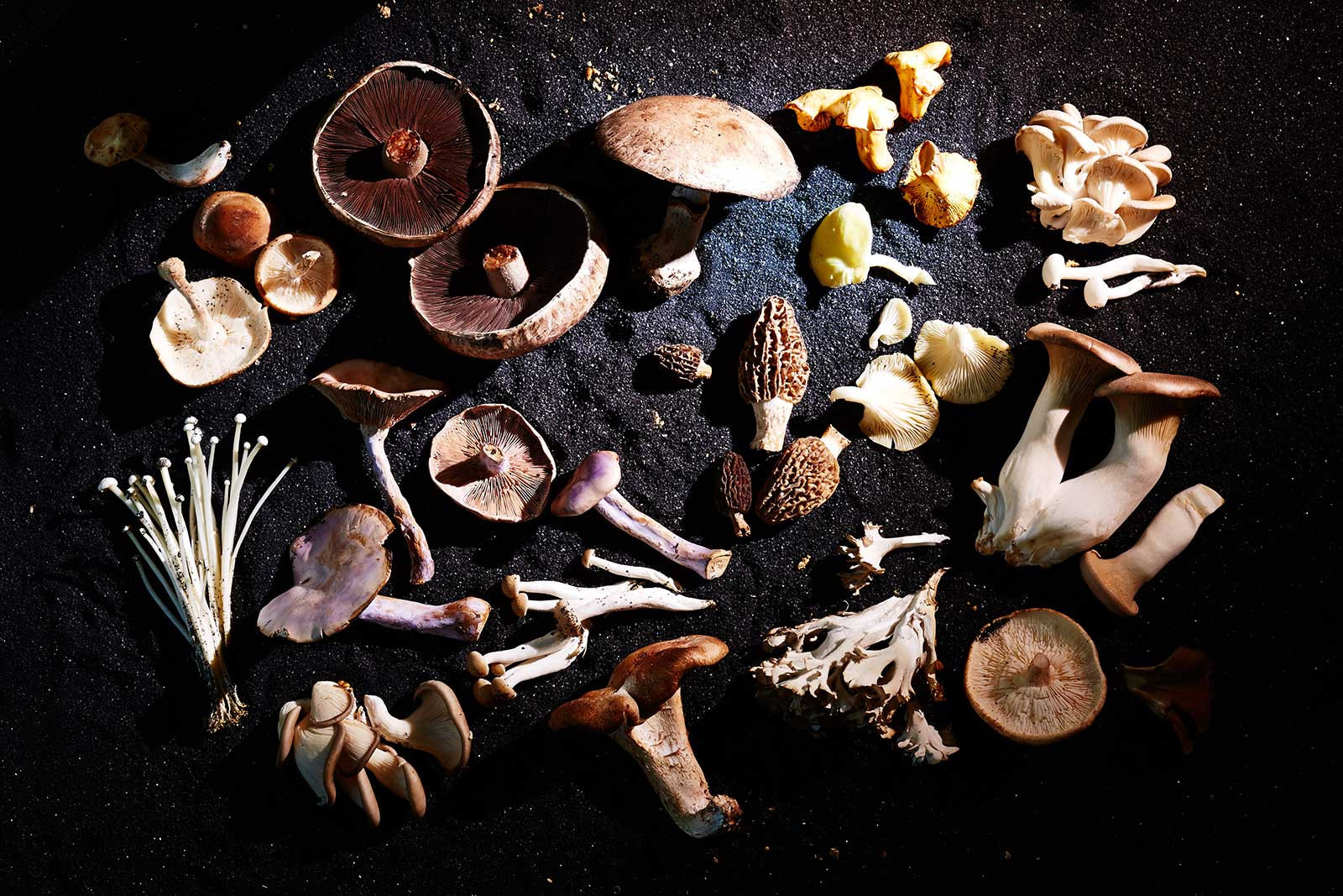List of Mushroom Adaptogens and Benefits