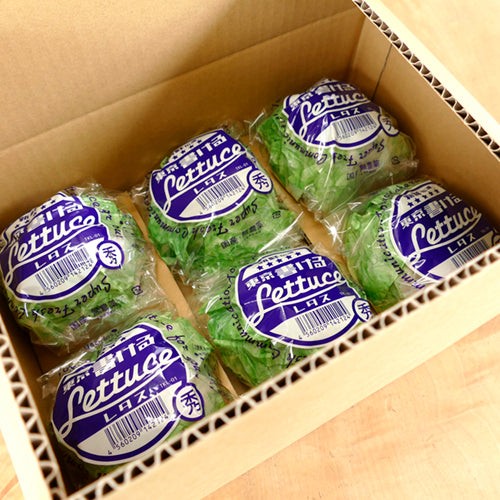 Tokyo Kakeru Lettuce (Lettuce You can Write on) - Set of 2【0423-10】