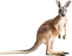 Kangaroo & Wallaby Nutrition Products