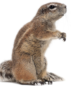Ground Squirrel Nutrition Products