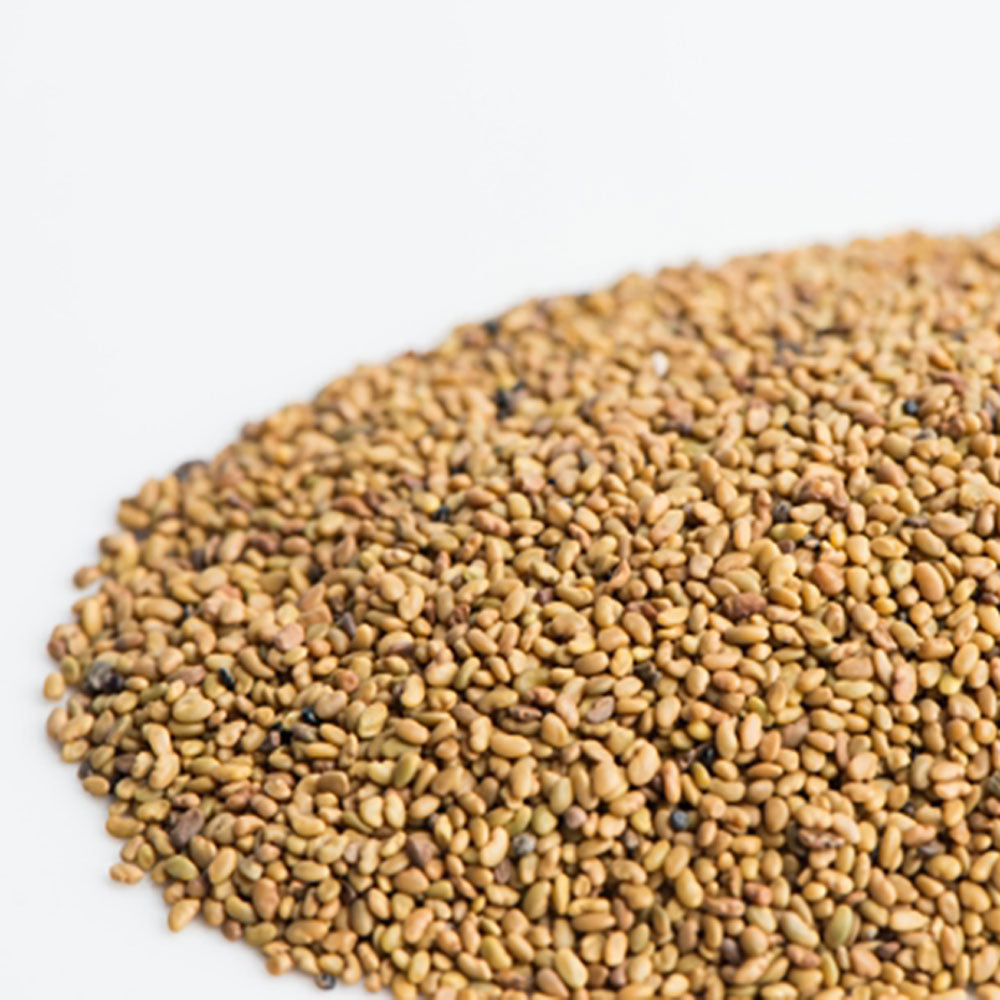 Alfalfa Sprout Seeds