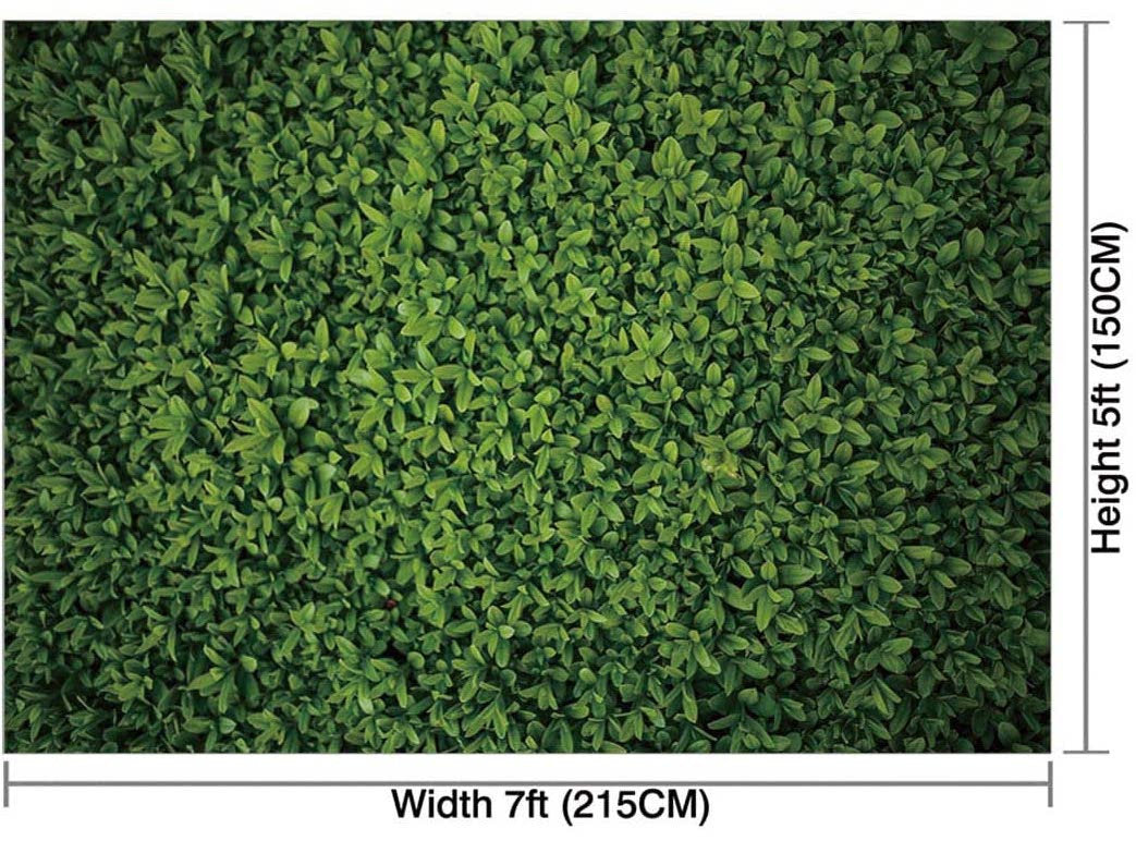 Greenery 5x7 Feet Boxwood Backdrop