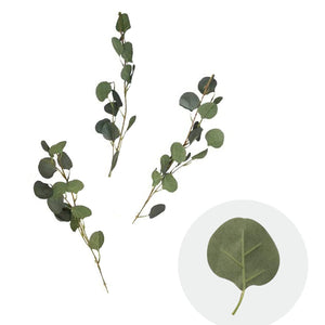10-Pack Eucalyptus Leaves Branches