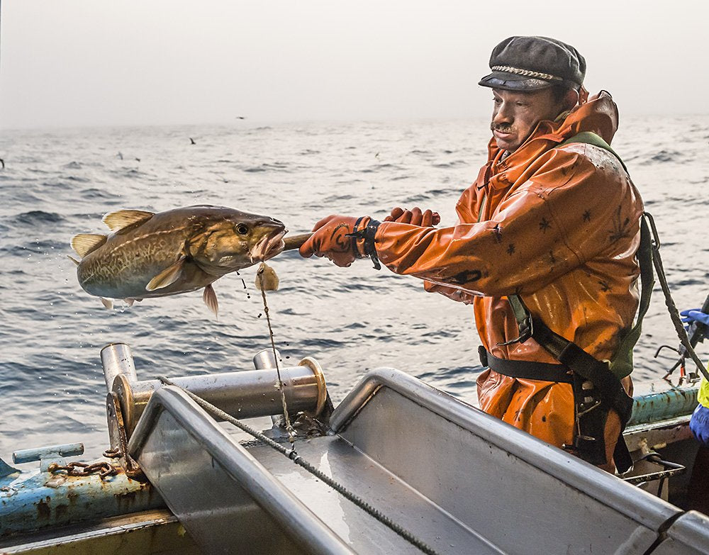 The Truth about Pacific Cod