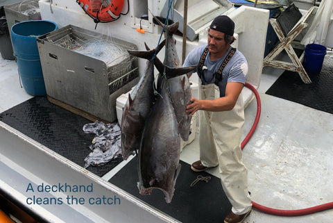 Deckhand cleans the catch