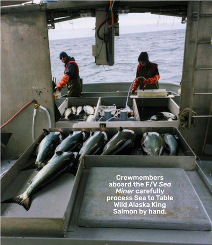 Crewmembers aboard the F/V Sea Miner carefully process Sea to Table Wild Alaska King Salmon by hand.