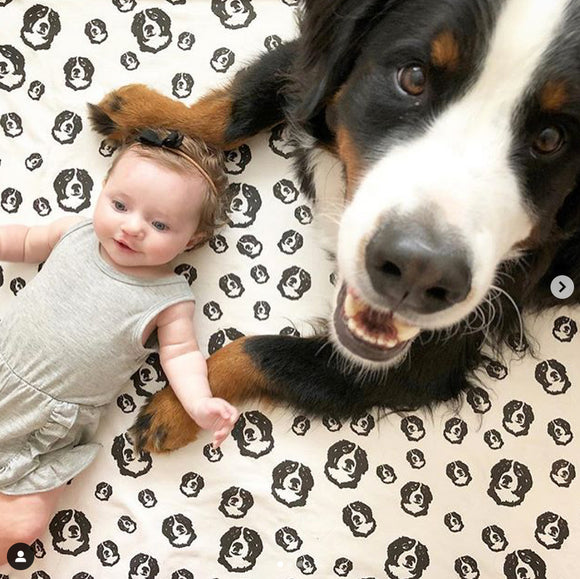 Bernese Mountain Dog Print Organic Cotton Baby Swaddle Blanket 35