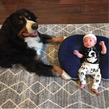bernese-mountain-dog-and-baby
