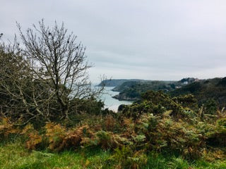 View to Caswell Bay from Bishop's Wood