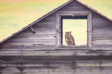 Load image into Gallery viewer, Owl in Square Barn Window