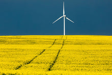 Load image into Gallery viewer, Wind power over Canola Fields