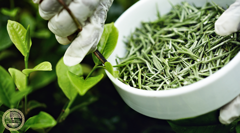 White Teas Are Full of Nutrients